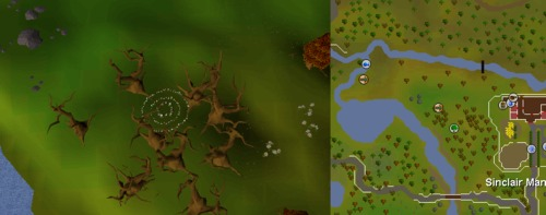 Fairy_ring_CJR.png